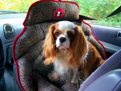 PupSaver Small Dog Safety Seat