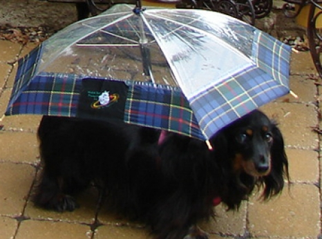 Waterproof Dog Coats Singletrack Magazine