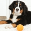 how to read your dogs body language modern dog magazine