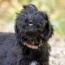 Truly Bark-worthy Dog Treats