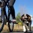 BikeTowLeash
