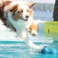 The Best Exercise For Your Dog's Breed