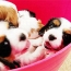 Bucket of Puppies