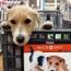 Buddy-&-Cart.jpg