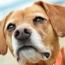 Revolutionary New Treatment for Canine Arthritis