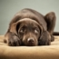 CanineConfidence-sm.jpg