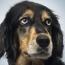 Canine Empathy