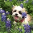 Dogs in the flowers