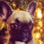 How to Keep Fido Safe Over the Holidays