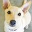 DogDecoder-Thumbnail