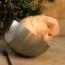 Dog in Bowl