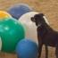 DogSports-sm.jpg