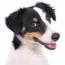 DogsThink-Thumbnail