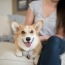 Embrace happy corgi