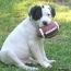 Super Bowl Dog