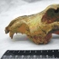 Ancient Dog Skull Shows Early Pet Domestication