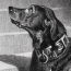 Do Dogs Grieve Over A Lost Loved One?