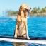 Hawaiian Dream Vacation—With Your Dog!
