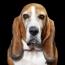 Canine Faux Pas: