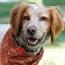 Pet Talk: Flea and Tick Control