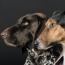 PettingWars-Thumbnail
