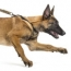 The Top Five Dog Behavioural Problems and How to Solve Them