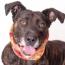 5 Reasons Why Senior Dogs Make Great Pets