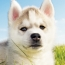 These Unlikely Hallmarks of Summer Could Harm Your Dog