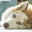 Is Chemotherapy Right For Your Dog