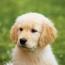 best dog breeder near me