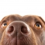 What Your Dog Can Tell By Smell