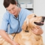 5 Ways to Thank Your Vet
