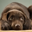HELP! What To Do In Common Canine Emergencies