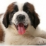 American Humane Association Partners with Modern Dog