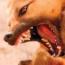 baddog-sm.jpg