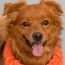 Best Friend Animal Society Helps Declare Inde-Pet-Dence This 4th