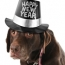 Keep Your Pets Calm this New Year's Eve