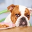 How to Prevent Diabetes in Dogs