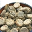 A Dog Treat Recipe For Fresh Breath