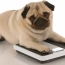 Is your dog overweight or obese?