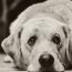 UTI in dogs