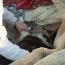 Dog found in tornado rubble