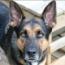 doggreetings-sm.jpg