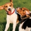 Is Your Dog Dominant or Submissive?