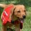 The Good News - Flint, the Cancer Detecting Wonder Dog