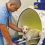 Increased Oxygen Intake Could Help Your Dog