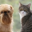 Pet Talk: Household Toxicities