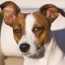 Training advice for aggressive intact dogs