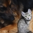 Interspecies Friendships: When Cats Join the Pack