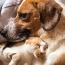 Pet Talk: Kidney Disease In Dogs And Cats